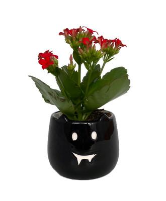 """Salem Bat Ceramic Planter with Live Succulent Plant - 3"""" x 3"""""""