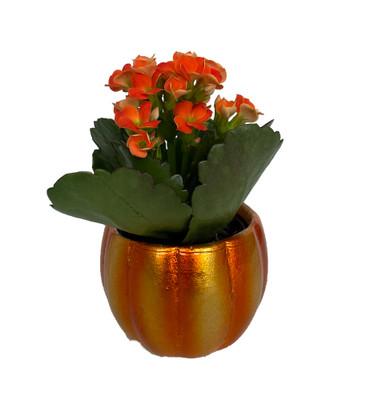 "Mini Pepo Pumpkin Planter with Orange Kalanchoe Succulent Plant- 3"" x 3"""