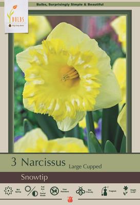 Snowtip Large Cupped Daffodil - 3 Bulbs - 14/16 cm Bulbs