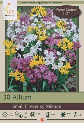 Small Flowering Allium Mix - 30 Bulbs - A Rainbow of Color - 5/6 cm Bulbs