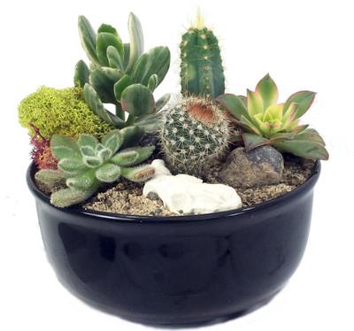 New Mexico Steer Head Cactus & Succulent Garden - Glazed Ceramic Pot