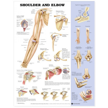 """SHOULDER AND ELBOW CHART 20"""" W X 26"""" H, STYRENE PLASTIC"""