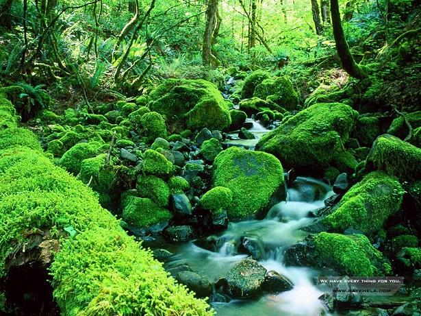 moss-webpage-wallpaper-resized.jpg