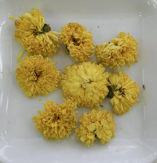 Krysantemum - hela blommor