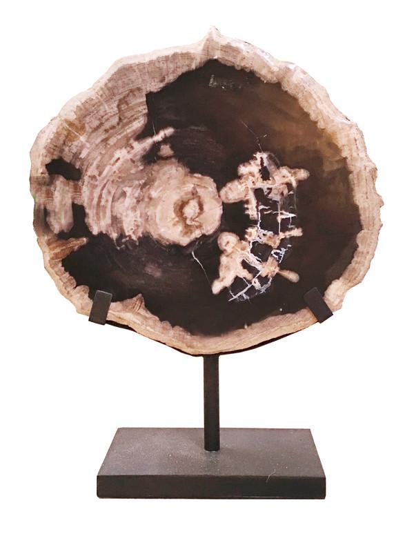 Petrified Wood - Slab -PT-SLA-016