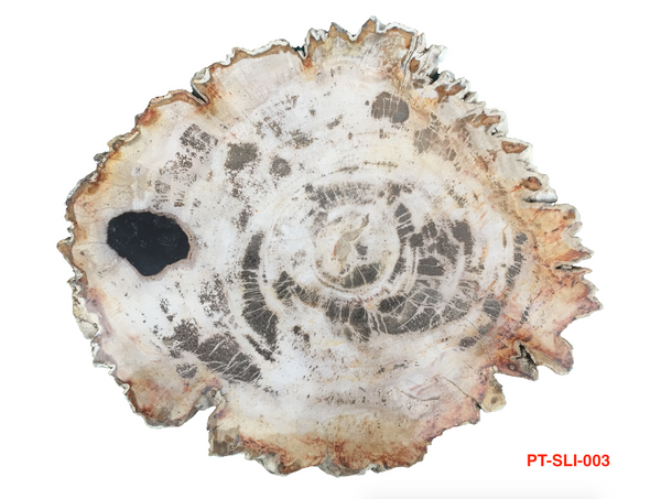 Petrified Wood - Slice - PT-SLI