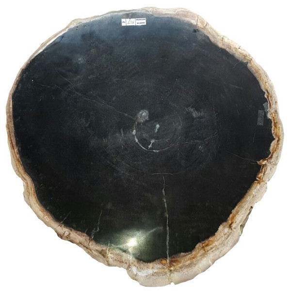 Petrified Wood - Table Top only RAW-507