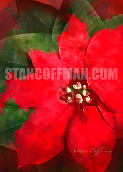 Watercolor of Poinsettia to Share this Christmas (Digital Download)