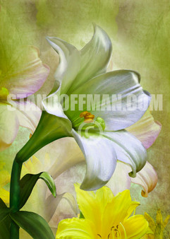 White Easter Lily with Yellow Flowers (Digital Download)
