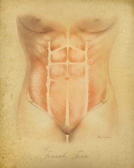 Female Torso Anatomical Illustration