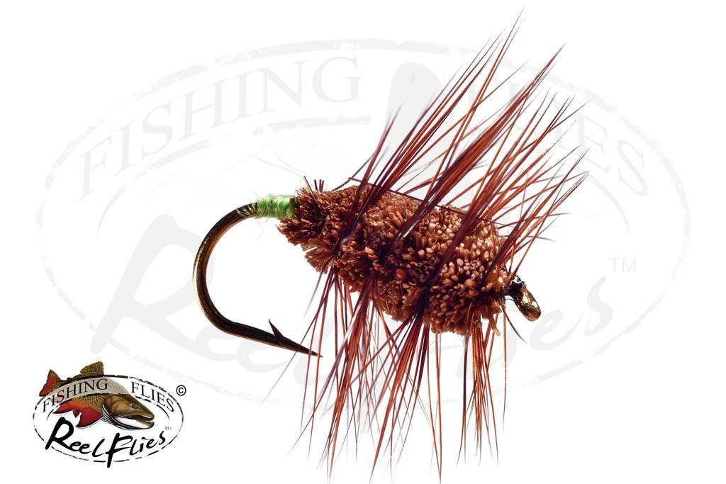 Brown Buck Bug Green Butt