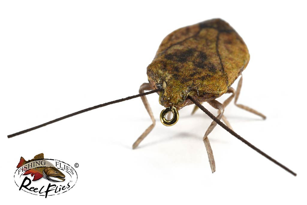 Realistic Stink Bug Brown