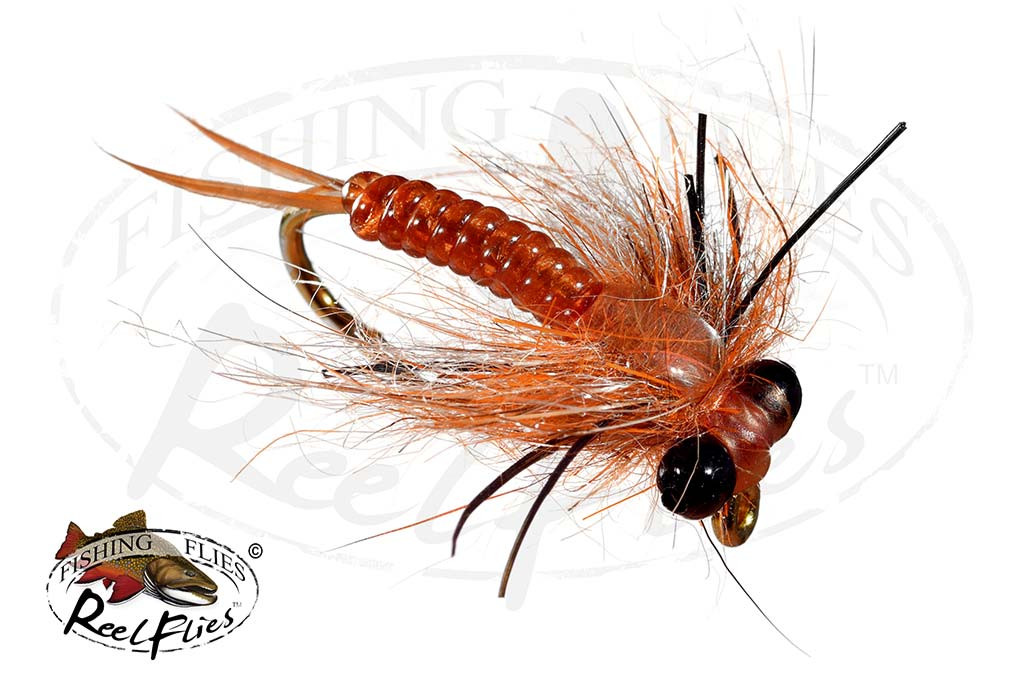 Brown Tarantula Stonefly Nymph