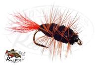 Black Buck Bug Orange Tail