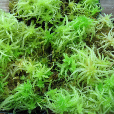 Sphagnum Moss is a low maintenance way to dress up any sunny area.