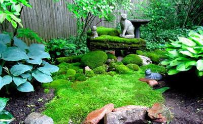 Moss garden is a low maintenance way to keep area beautiful.