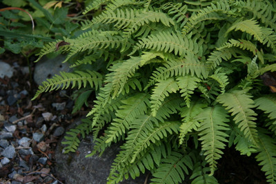 Ferns are a low maintenance way to fill any space.