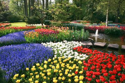 Garden of flowers look amazing around any space.