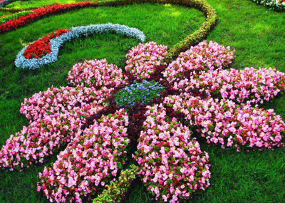 Flowers blooming can make any yard look amazing.