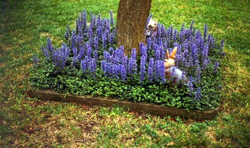 How to Build a Beautiful Shade Garden