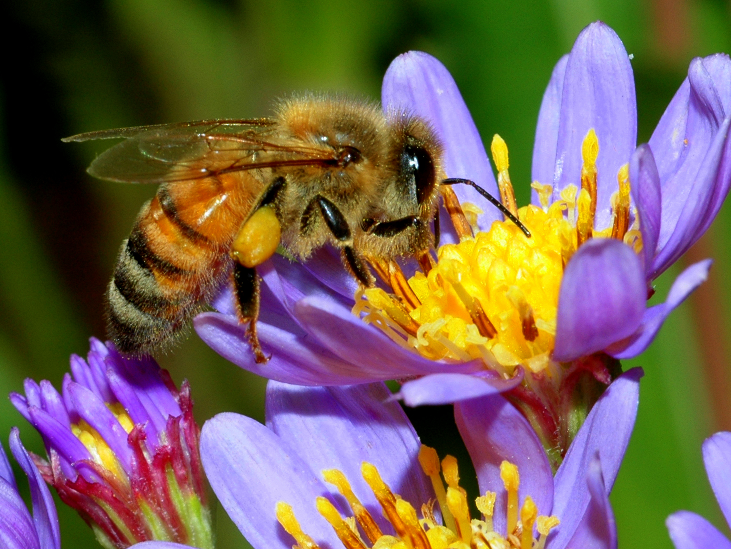 Bees are your Friends and Hornets Hate Your Guts