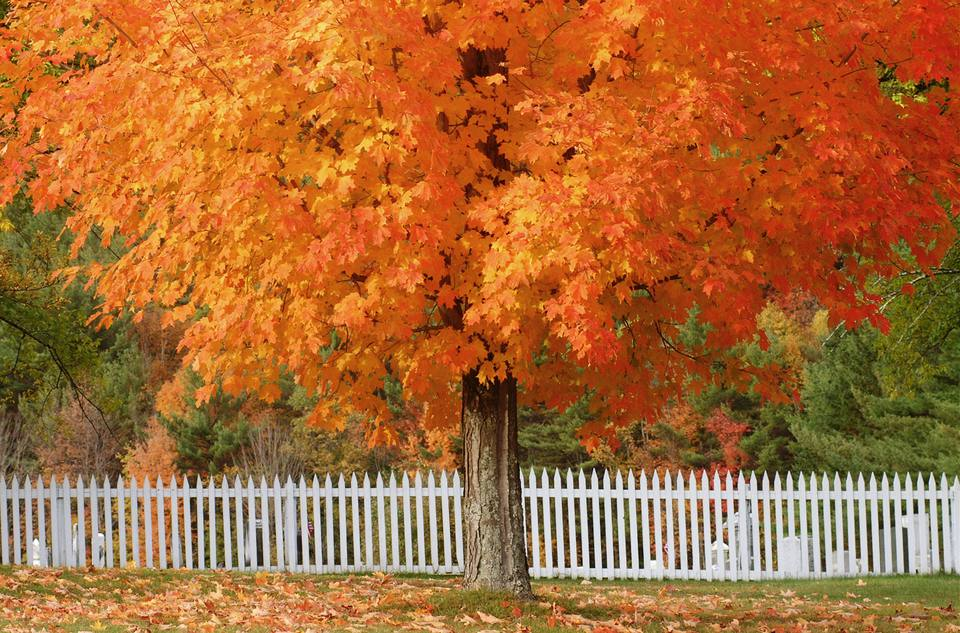 Most Colorful Fall Foliage Trees