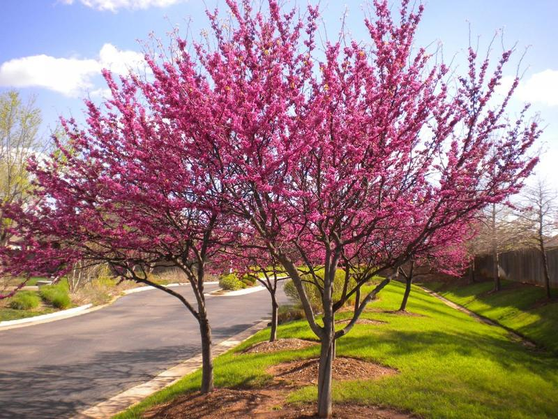​Nurseries Offer The Best Quality Trees & Plants