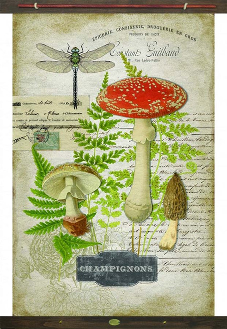 Mushrooms Canvas Wall Art, Champignons, Red Horse Signs