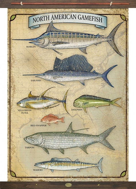 Game Fish Red Horse Signs canvas art