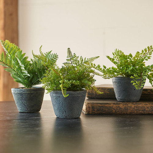 "Potted fern, charcoal grey cement pot, RAZ Imports. Pot measures 3.5"" in diameter. Overall height with fern is approximately 10"" x 7.5"". Approximately a dozen branches."