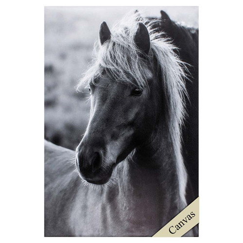 Icelandic Horse, Propac Images, canvas art, black and white photograph of horse's head