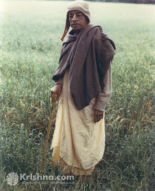 """Srila Prabhupada Photo, Field in France, 8""""x10"""""""