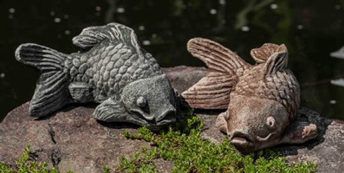 Coy Koi Fish