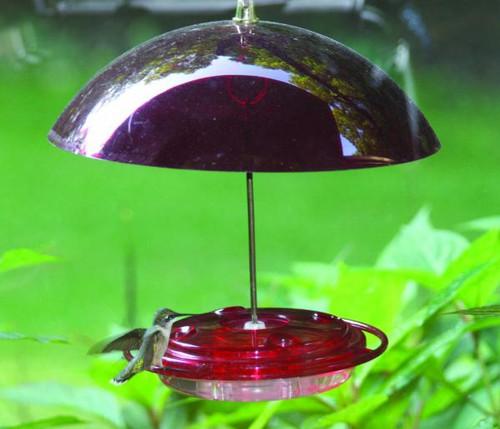 Hummingbird Feeder With Dome