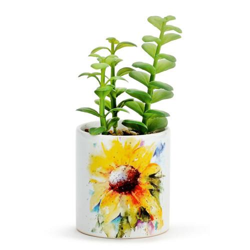 Sunflower Succulent