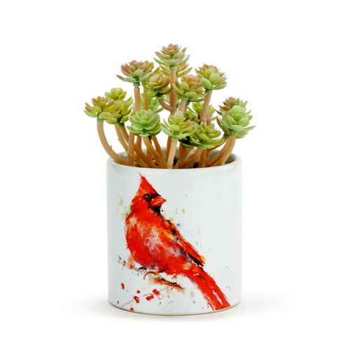 Dean Crouser Cardinal Succulent