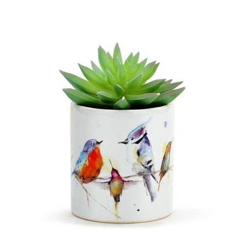 Little Birds Succulent