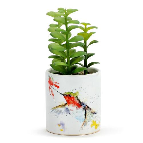 Hummer & Flower Succulent
