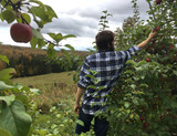 Orchards in Flannel