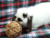 Happy Easter Folks!