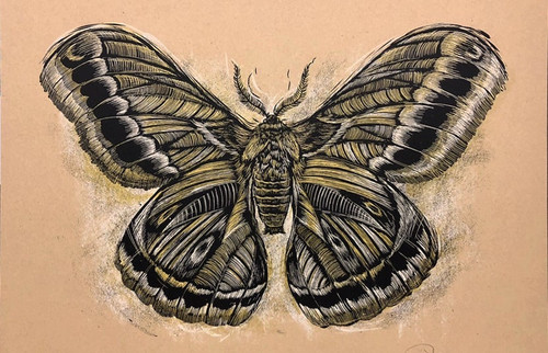 Reconstructed Moth 18x24 Screen Print