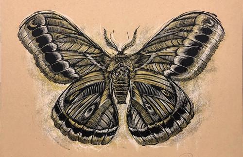 Reconstructed Moth 18x24 Screen Print