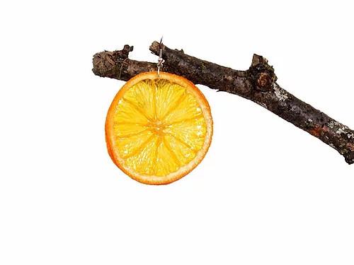 Large Orange Slice Earrings - Surgical Steel Hooks
