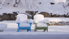 Adirondack Shellback Chair by Seaside Casual