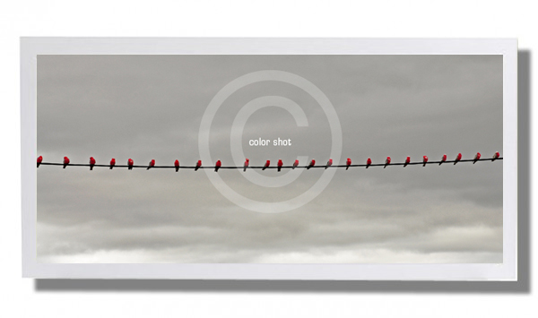 Color Shot - Birds on a wire - with white box frame