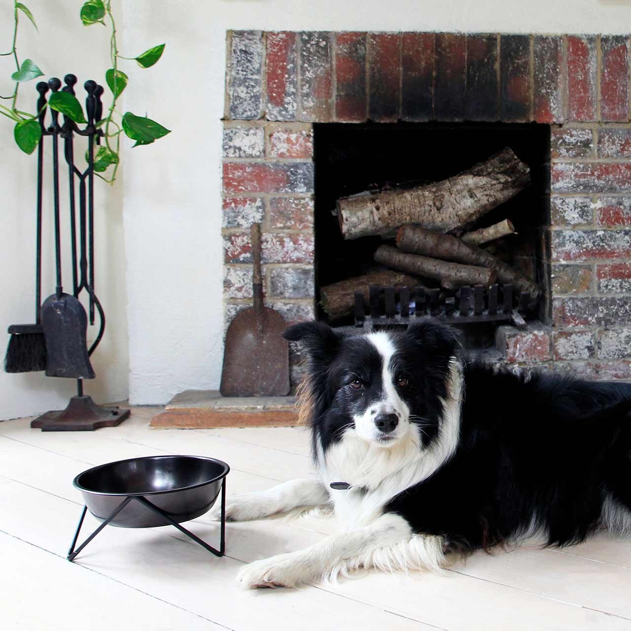 bendo luxe woof dog bowl black on black | The Design Gift Shop