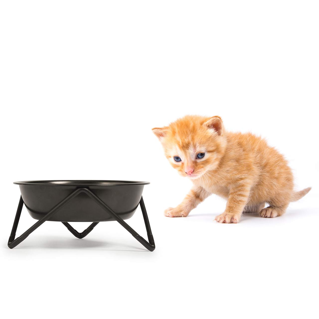 BENDO meow luxe cat dish black on black | the design gift shop