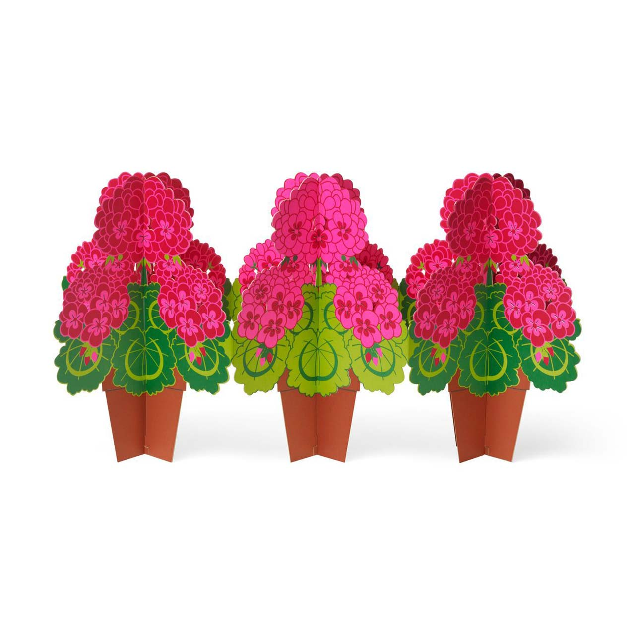 MoMA Pop-Up Cards Cheerful Geranium Set of 6   the design gift shop