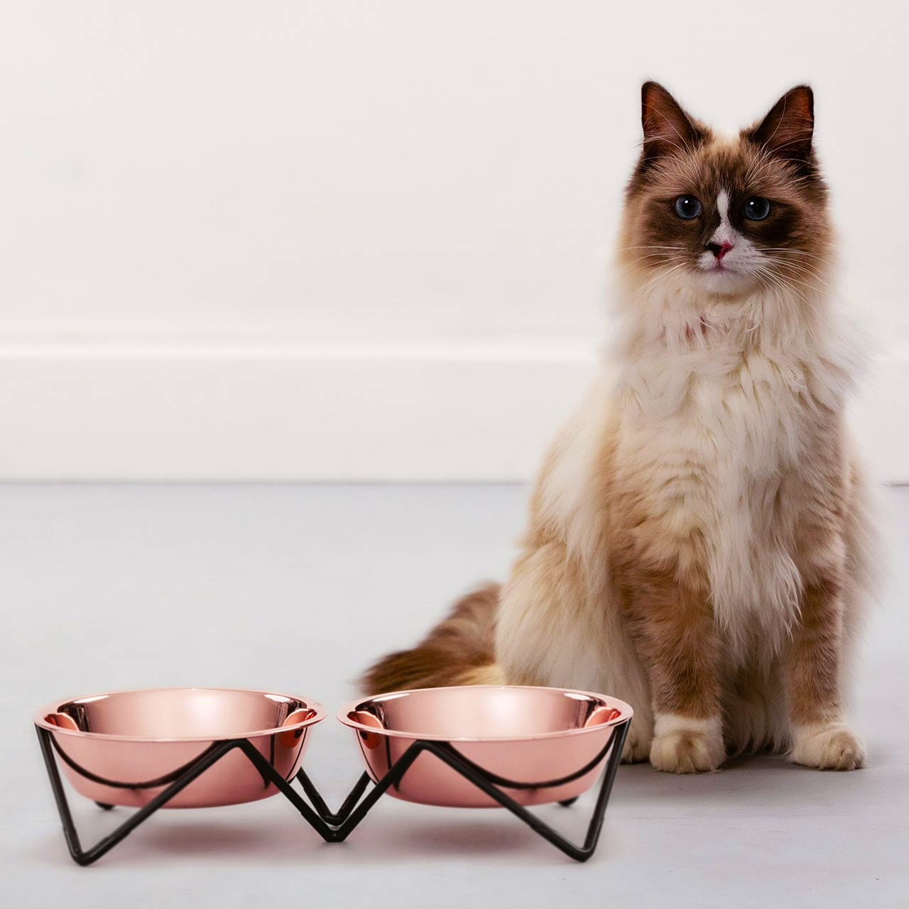 BENDO meow meow luxe cat double dish copper on black   the design gift shop
