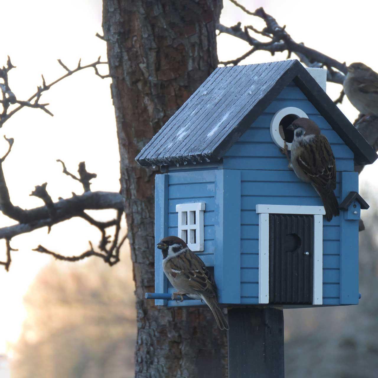 WILDLIFE GARDEN Bird Feeder & Nesting Box Blue Cottage   the design gift shop